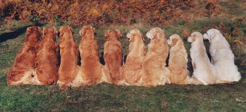 Breed colours